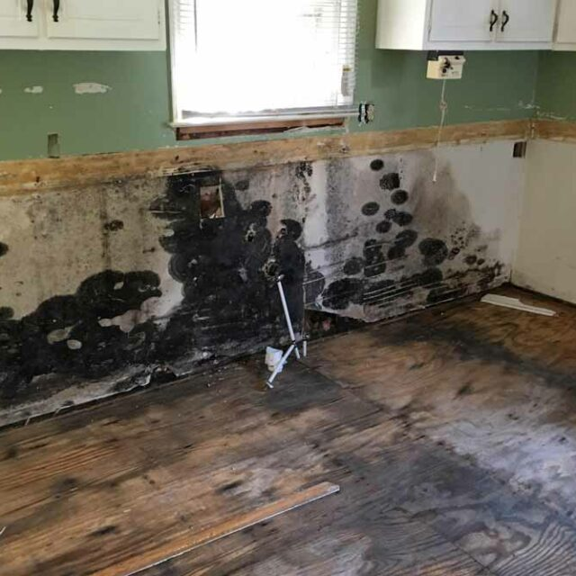 Mold Removal in Raleigh, NC