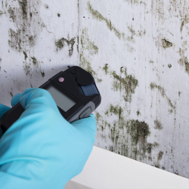 Mold testing in Raleigh, NC