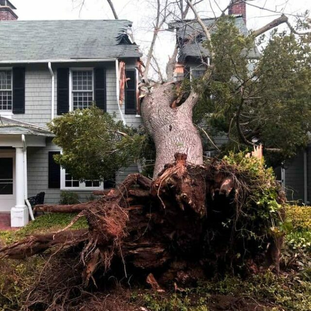 Storm Damage Cleanup in Knoxville, TN